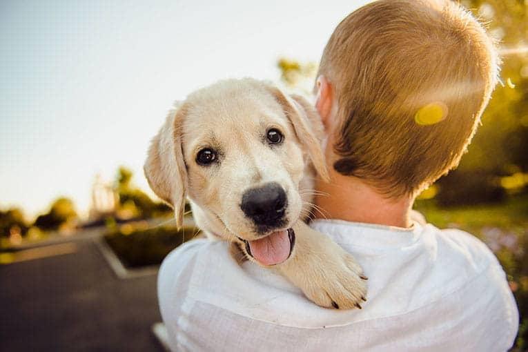 Din bästa vän kräver ett bra skydd, teckna hundförsäkring